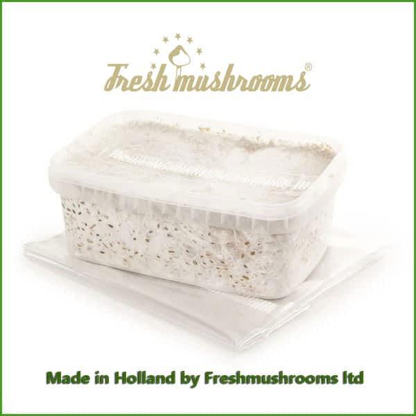 Golden Teacher 1200ml Grow Kit Freshmushrooms mycelium