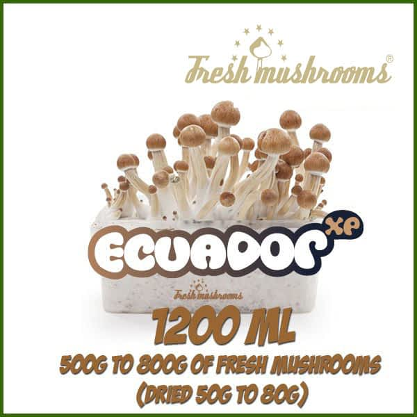 Ecuador 1200ml Grow Kit Freshmushrooms