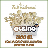 Albino A 1200ml grow kit