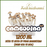 Cambodian 1200ml Grow Kit