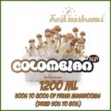 Colombian 1200ml Grow Kit Freshmushrooms