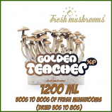 Golden Teacher 1200ml Grow Kit