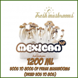 Mexican 1200ml Grow Kit