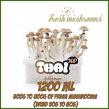 Thai 1200ml Grow Kit Freshmushrooms